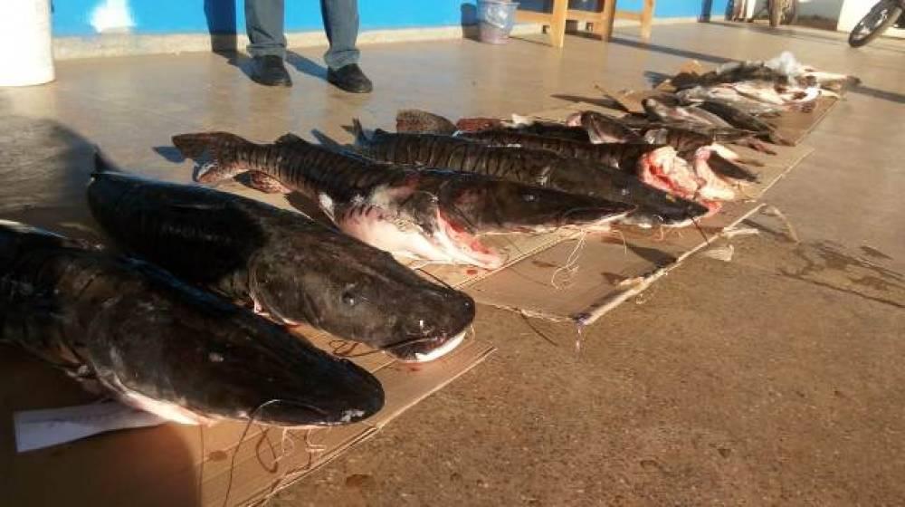 Polícia apreende 120 kg de peixes ilegais com paranaenses e doa para entidades em Rondônia