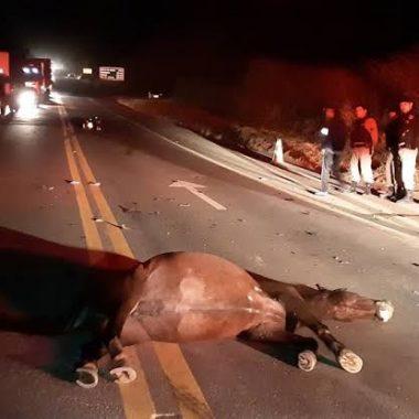 Cavalos soltos provocam acidente na BR-364, em Ji-Paraná
