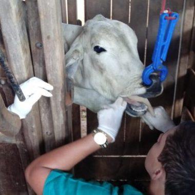 Idaron RO abre Processo Seletivo com 35 vagas para Médico Veterinário