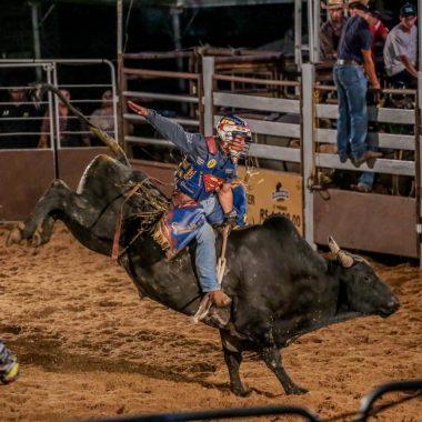 Lei estabelece bem-estar animal em todas as atividades esportivas e culturais com bovinos e equinos