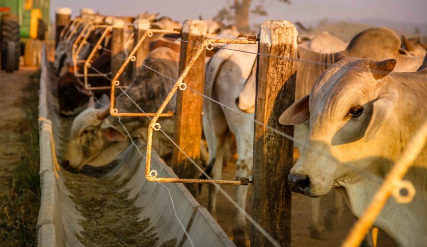 Ministra da Agricultura apoia à suspensão da vacina contra aftosa e Rondônia vê crescer perspectiva de mercados