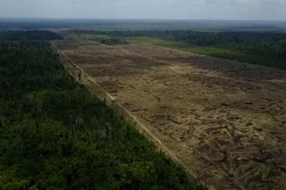 Área sob alerta de desmatamento na Amazônia em novembro é a maior para o mês desde 2015