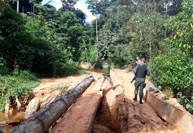 STJ mantém prisão de engenheiro florestal acusado de extração ilegal de madeira em terra indígena