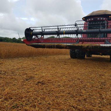 Produtores de Porto Velho iniciam colheita de soja com expectativa acima de 37 mil toneladas