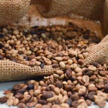 Seagri firma convênio de mais de R$ 6,2 milhões para fortalecer a cafeicultura em Rondônia