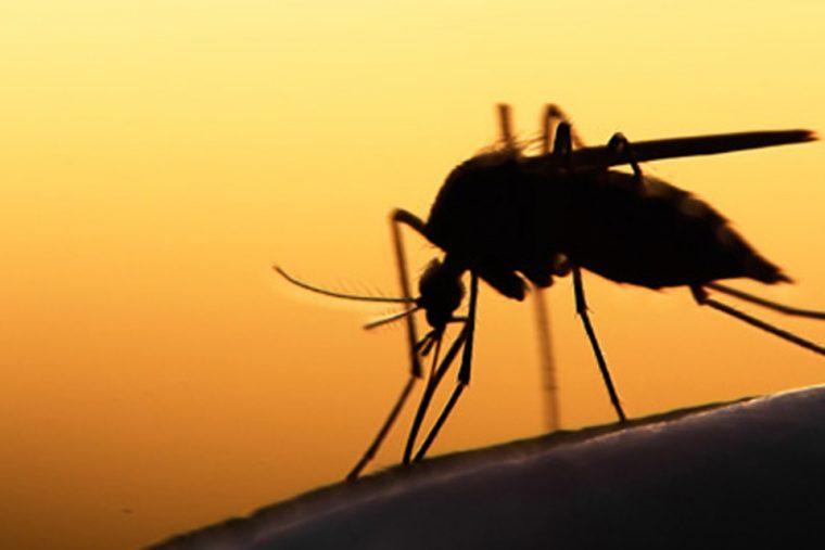 Número de casos de malária aumenta quase 40% em Rondônia nos últimos 3 anos