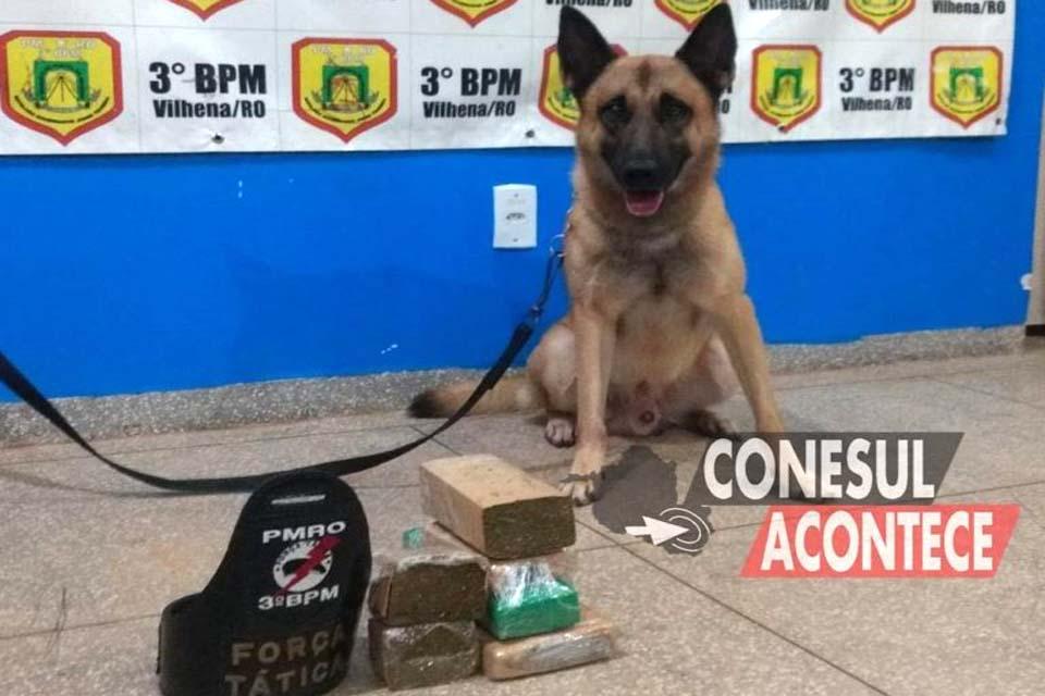 Cão Farejador da PM localiza quase 3 kg de maconha em ônibus