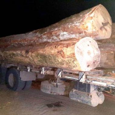 Três homens são presos em flagrante por transporte ilegal de madeiras