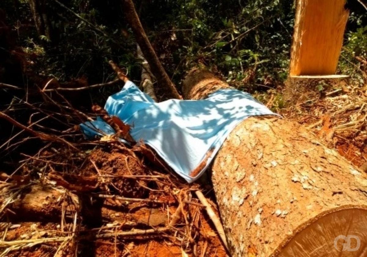 Trabalhadores morrem atingidos por tronco de árvore