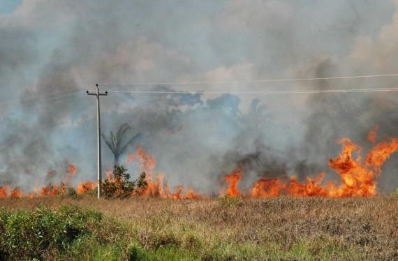 Decreto federal suspende por 120 dias uso do fogo, principalmente na Amazônia Legal