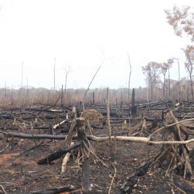 Ações civis são movidas pela PGE e MP para responsabilizar invasores das Resexs em Rondônia