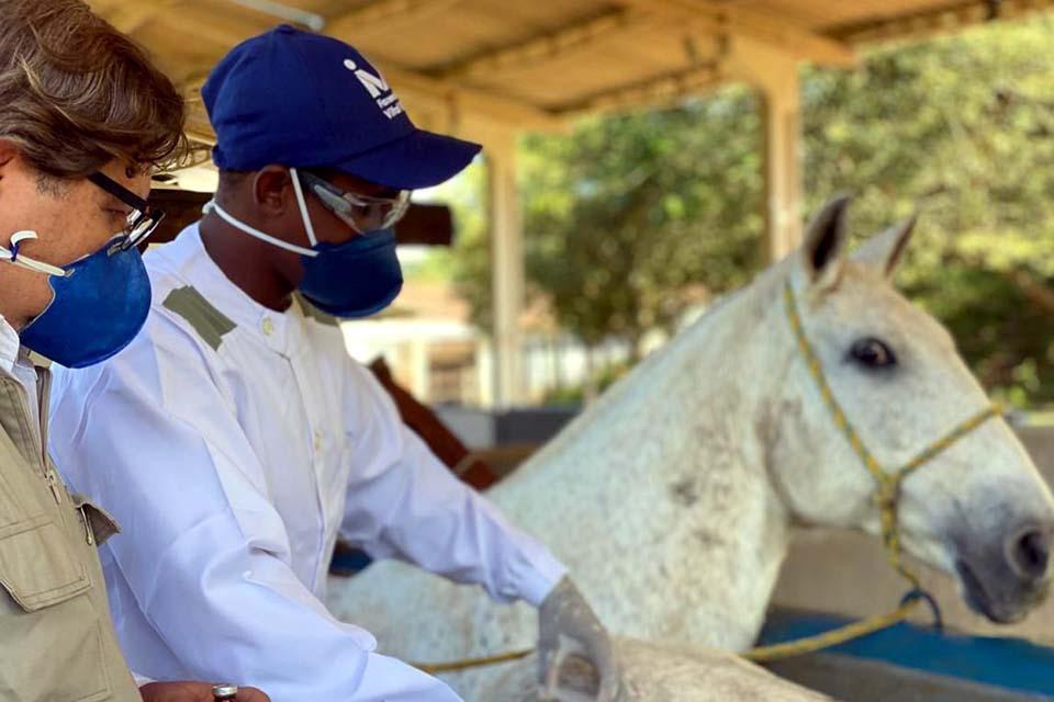 Soros produzidos por cavalos têm anticorpos potentes para covid-19