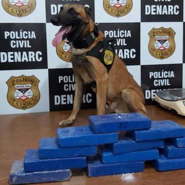 Cão farejador descobre 12 quilos de drogas em veículo avaliada em 300 mil