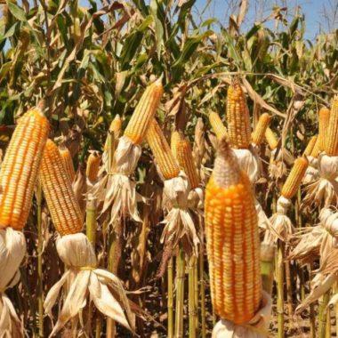 Agropecuária segue como setor que mais gera emprego em Rondônia, mesmo na pandemia