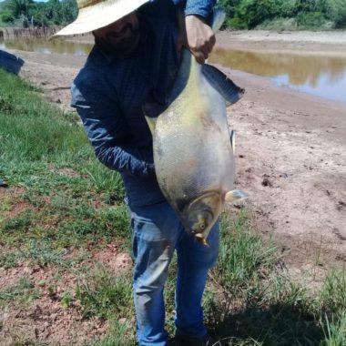 Governo de Rondônia aprova isenção da cobrança de ICMS na comercialização do peixe tambatinga no Estado