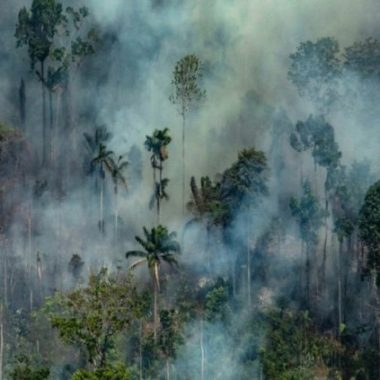 CRISE AMBIENTAL: Ministério do Meio Ambiente cria secretaria voltada para a Amazônia