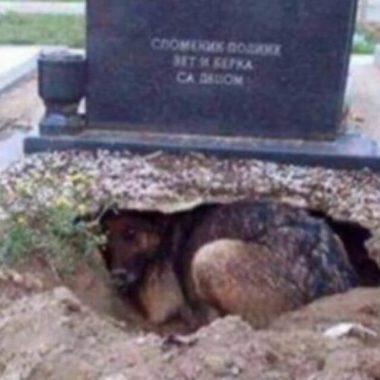 Com saudades, cachorro cava buraco no túmulo do dono para ficar mais perto dele